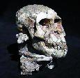 Evolución Humana: Paranthropus, Australopithecus y Kenyanthropus