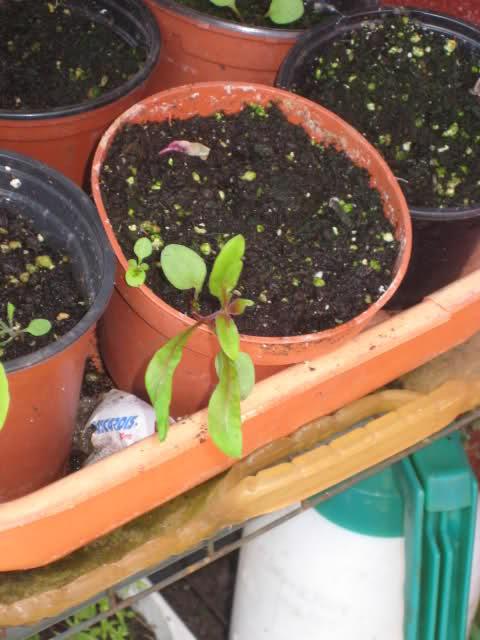 De semillas a futuras plantas Nb40wl