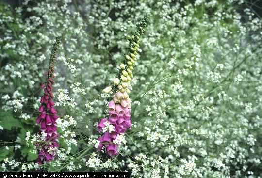 El Arco Iris en el Jardín 2h5s8ow