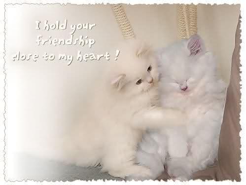 قطتى الجميله ( متجـــــــدد ) 2yvujck