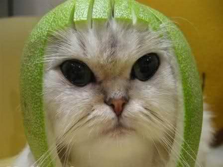 قطتى الجميله ( متجـــــــدد ) 30bixe0