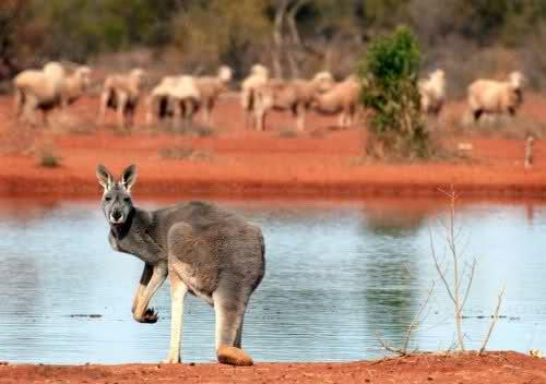 كل الجمال في قارة استراليا حيث الطبيعة الخلابة الساحرة، صور بآلاف الكلمات... 1p739t
