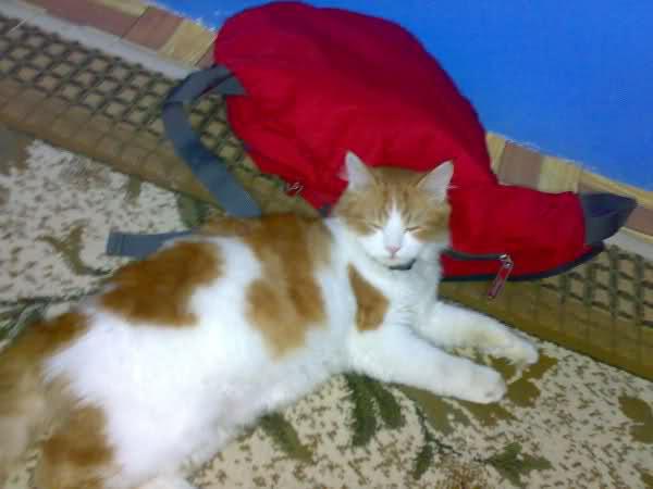 قطتى الجميله ( متجـــــــدد ) 2uy3xtw