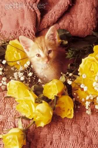 قطتى الجميله ( متجـــــــدد ) 2wovucp