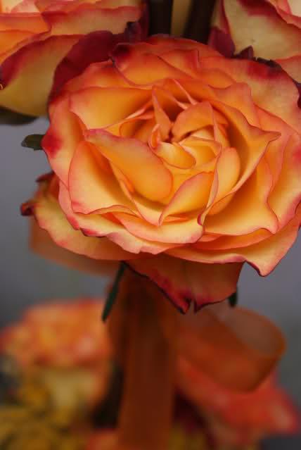 Aranjamente florale - Pagina 5 5nuo1d
