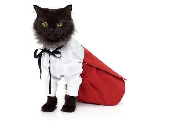 Những cô mèo xinh xắn 6p1edt
