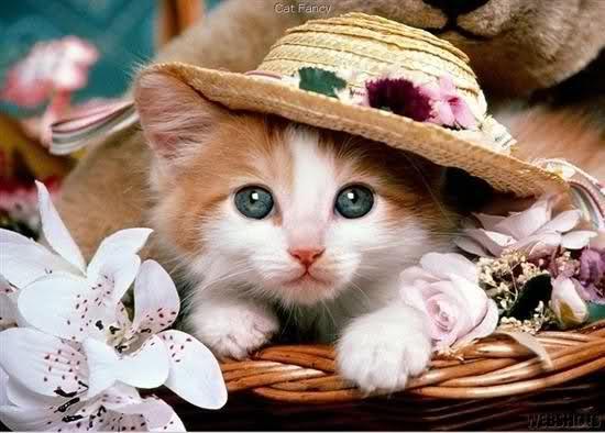 قطتى الجميله ( متجـــــــدد ) 15fpxd2