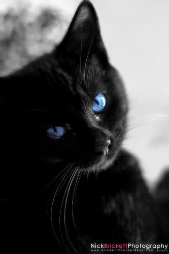 Du oder deine Haustiere als WaCa Katze! (Hilft bei langeweile!) - Seite 2 1z55cwp