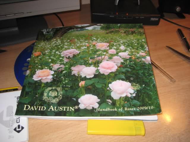 Algunas rosas de mi jarín :) - Página 4 2yybgjm