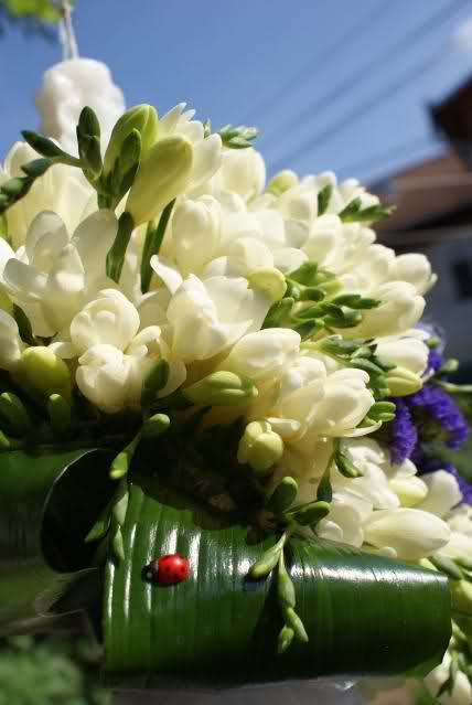 Aranjamente florale 2zrotc3