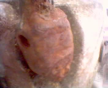 Derbi Tricampeona * Karioko Spgqpi