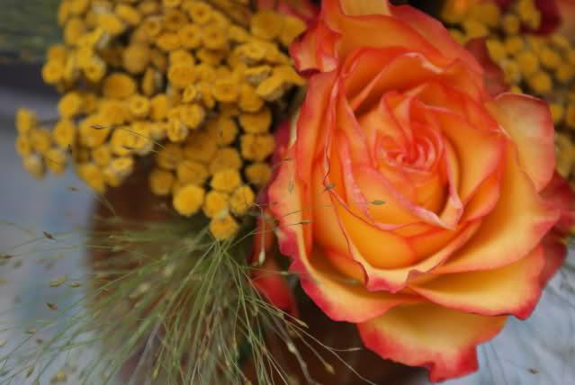 Aranjamente florale - Pagina 5 2j47wux