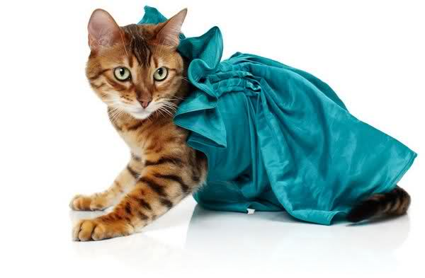 Những cô mèo xinh xắn 9qjssy