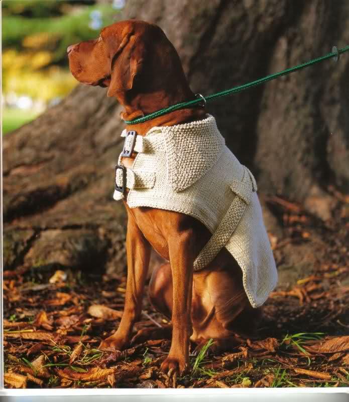 modelo de ropa para perros 1zn50uf