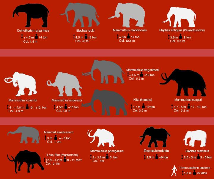 Elefantes Prehistóricos 25hn3w3