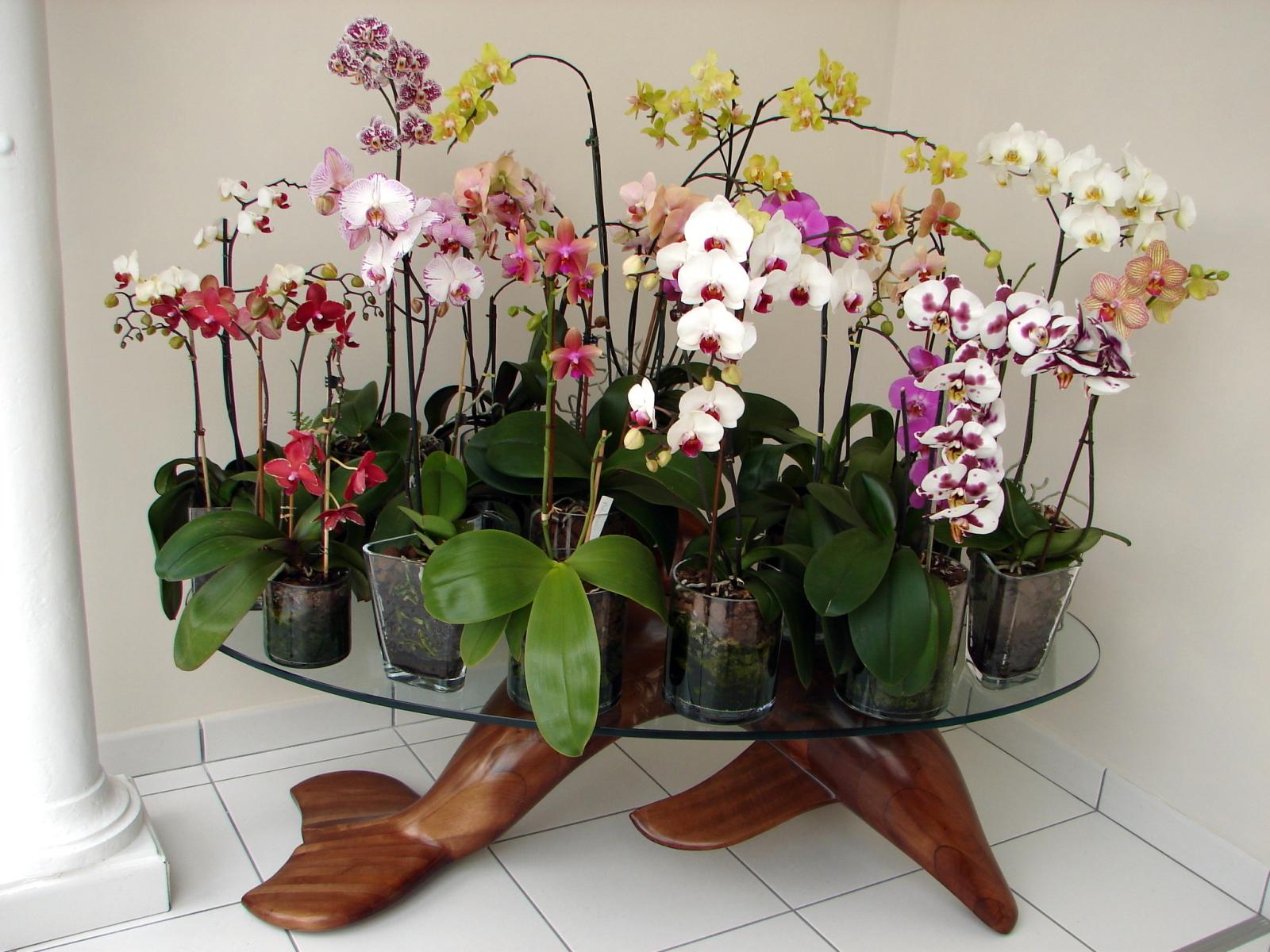 Comment Planter Une Orchidée culture phalaenopsis et autres orchidées en pot de verre