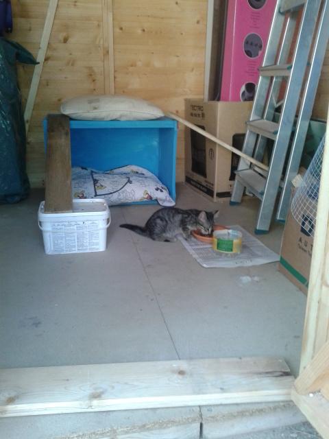 """Residencia felina """"Bon Cat"""" -Valencia- 307yfcp"""
