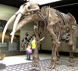 Elefantes Prehistóricos A2zpfm