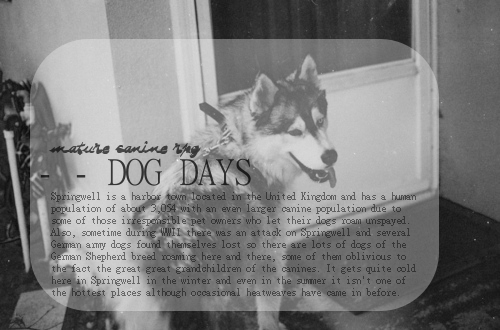 Dog Days | A Mature Canine Roleplay B5h8vl