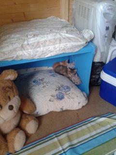 """Residencia felina """"Bon Cat"""" -Valencia- Dxjkn5"""