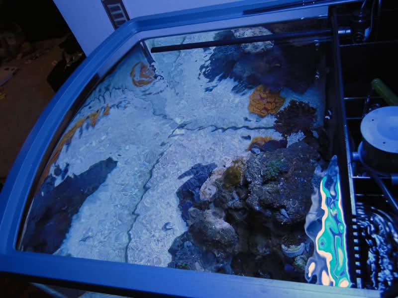 SERA Biotop 130 Nano Reef - LPS e Moles K3w1fl