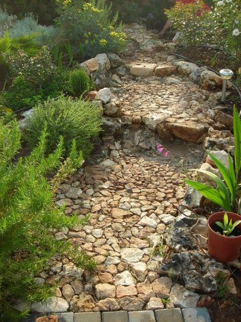 Nuestro jardín de Sa Possessió - Página 23 O7653m
