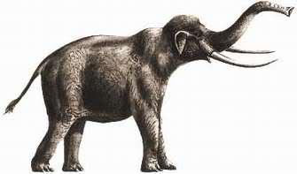 Elefantes Prehistóricos 11tlvee