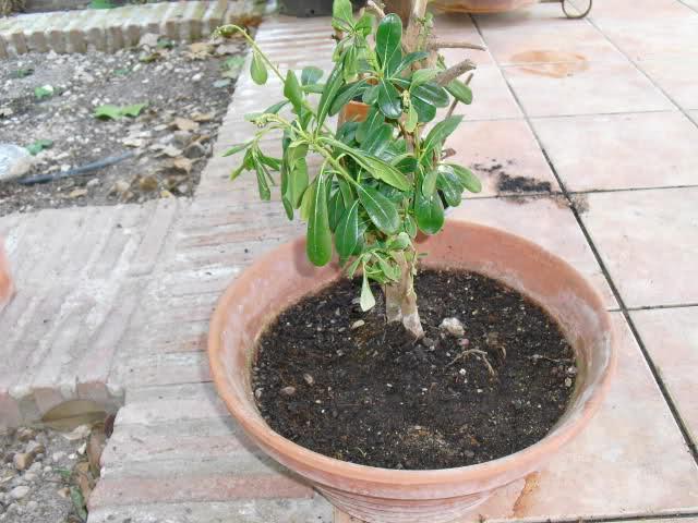 Planta seca después de trasplante  14lhmwl