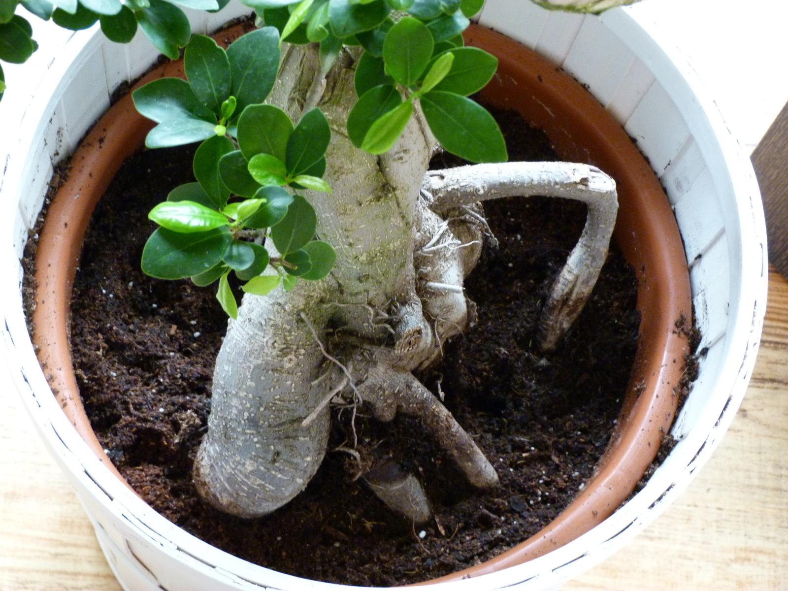 Caida descontrolada de hojas 25wgm