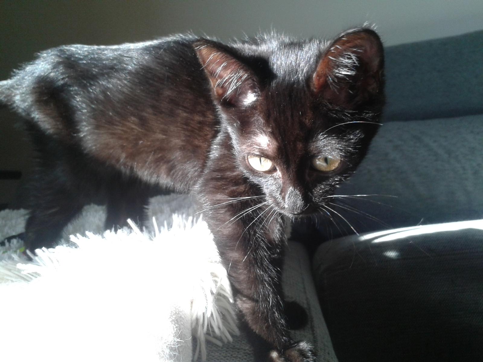 Yoko, la gata rescatada de la alcantarilla 2drrrpc