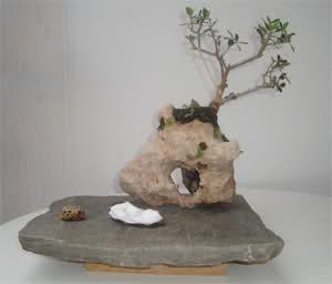 Olivo sobre piedra 30xd98i