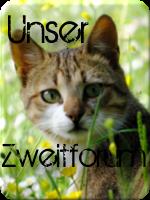 Warrior Cats - Portal 343mamb