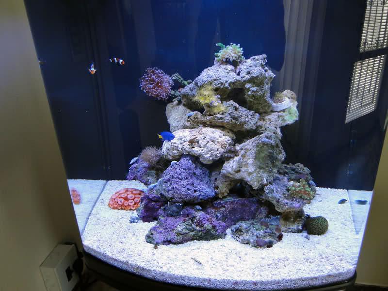 SERA Biotop 130 Nano Reef - LPS e Moles 34i328x