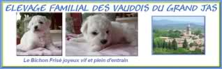 Album photos des bichons 9l9wfb