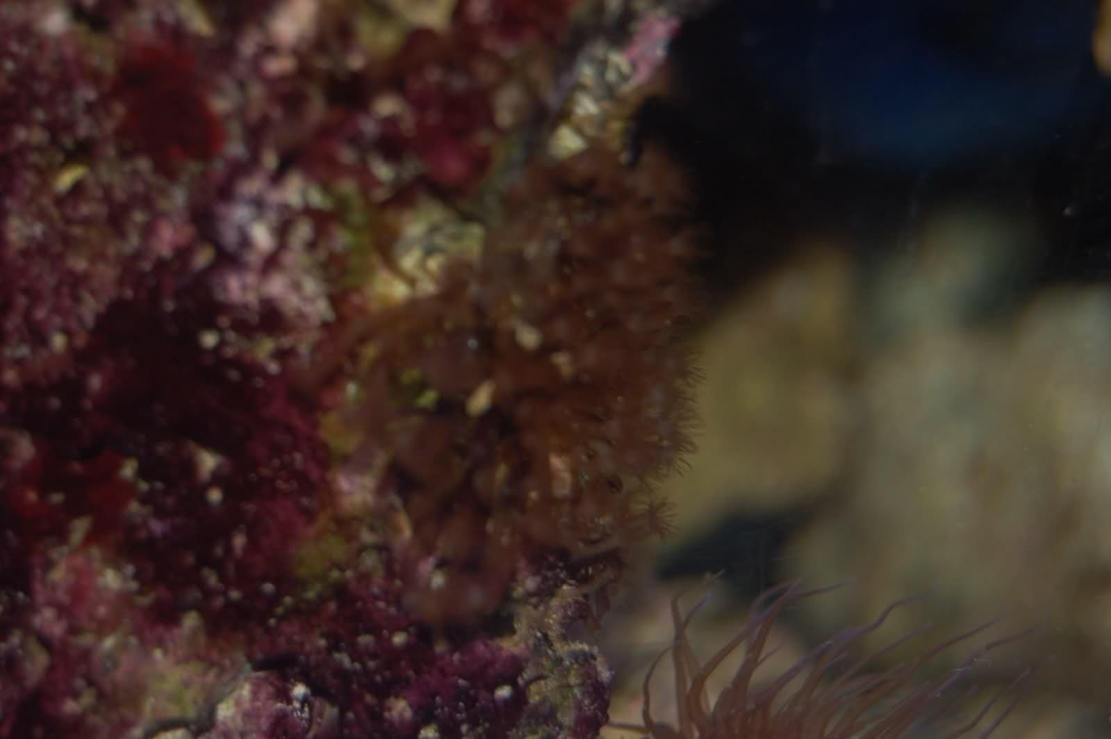 Identification d'un ver et d'un coraux ou algue? Be7lp4