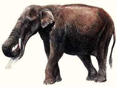Elefantes Prehistóricos Vn1rf5