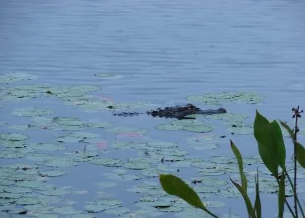 Critters of Coronado 10p591w