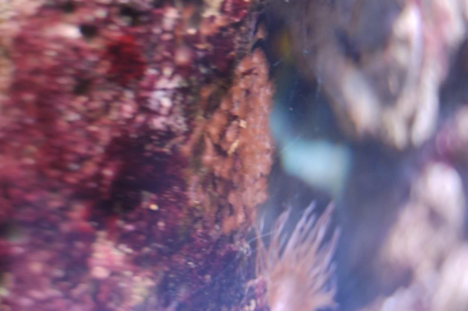 Identification d'un ver et d'un coraux ou algue? 11twkux