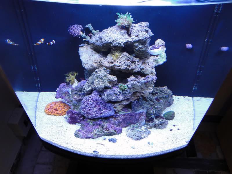 SERA Biotop 130 Nano Reef - LPS e Moles 35i7tra