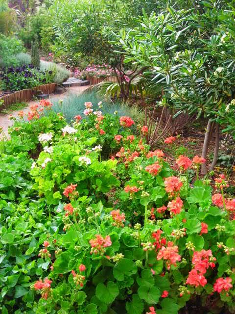 Nuestro jardín de Sa Possessió - Página 23 5njixk