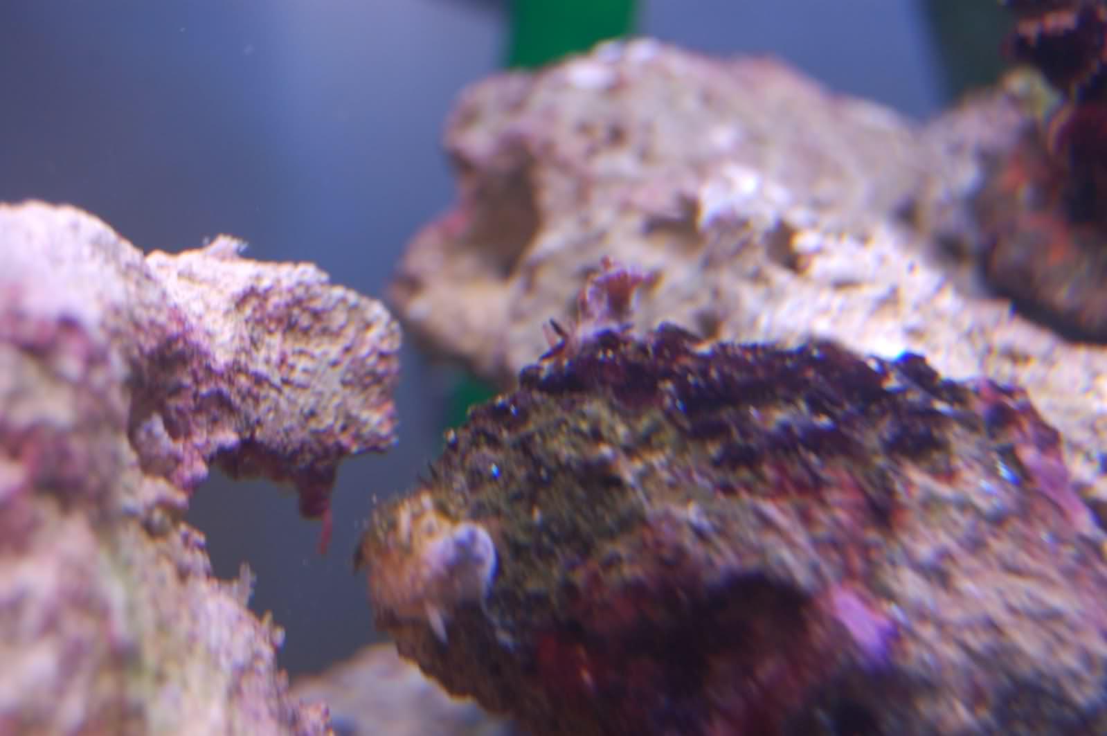 Identification d'un ver et d'un coraux ou algue? Rclzrb