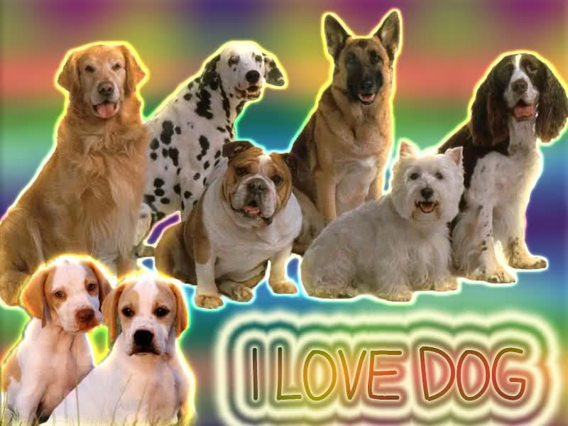 Ficha de afiliacion de I love dogs Zix4eq