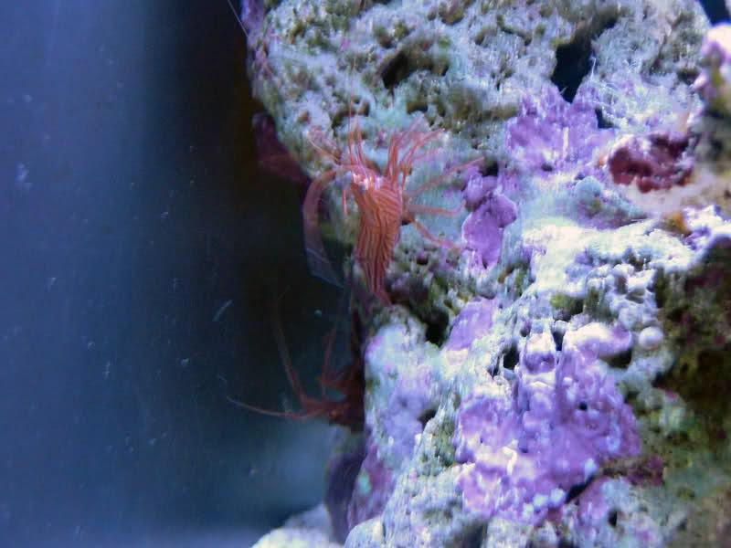 SERA Biotop 130 Nano Reef - LPS e Moles 1zdoq4m