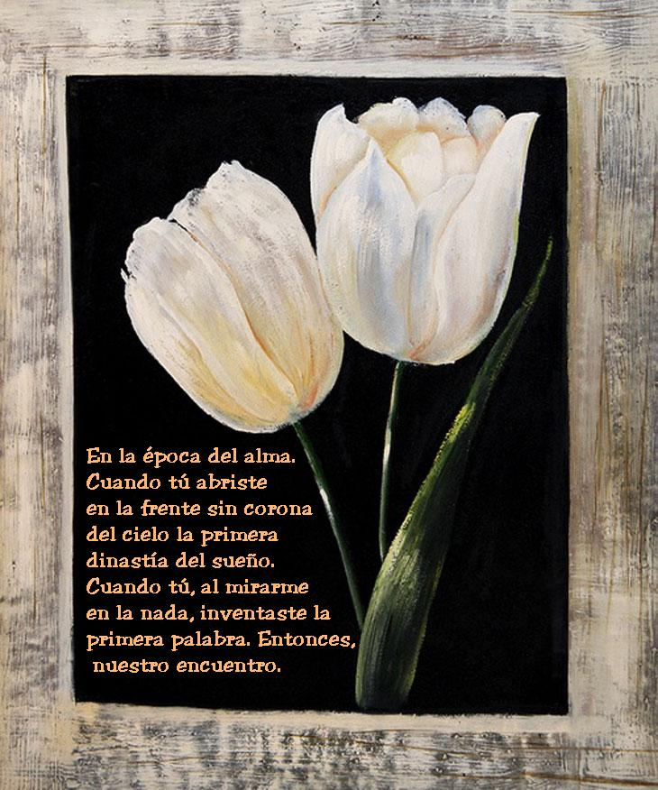 ¡¡¡¡Un tulipan para ti cada dia!!! 2ut2tfk
