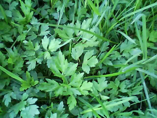 Otrovne i opasne biljke 2w5oikp
