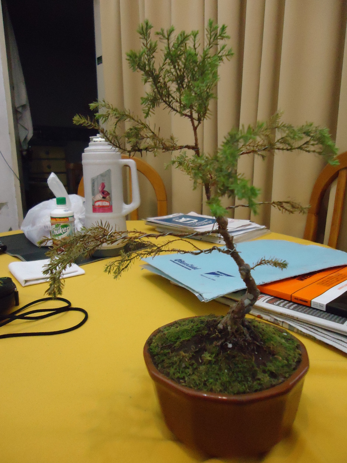 Se esta secando mi bonsai? Idxjlg