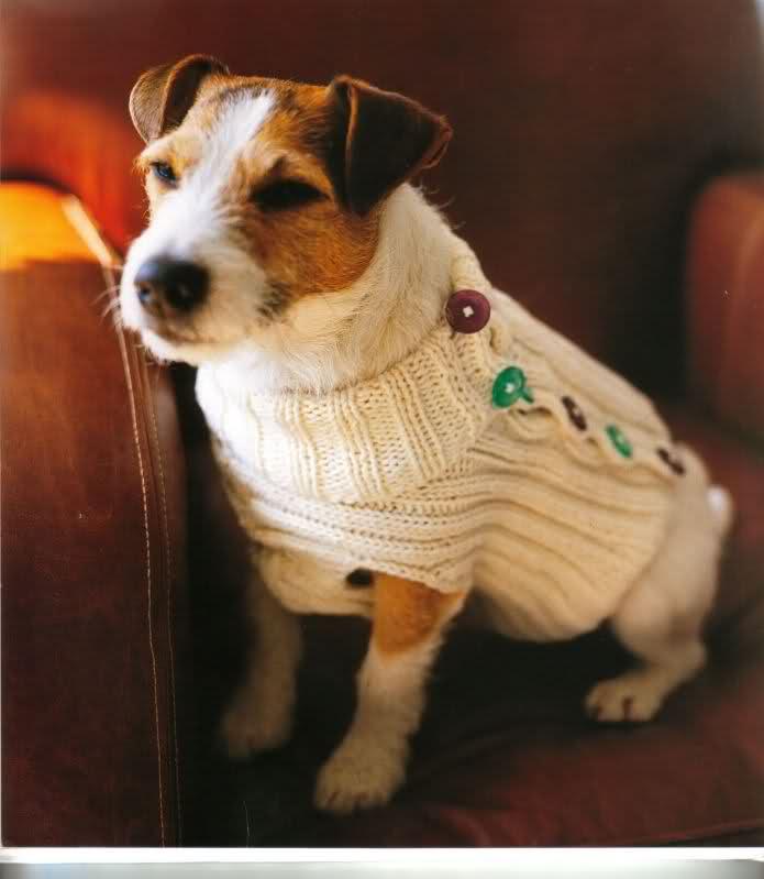 modelo de ropa para perros 24v5qmc