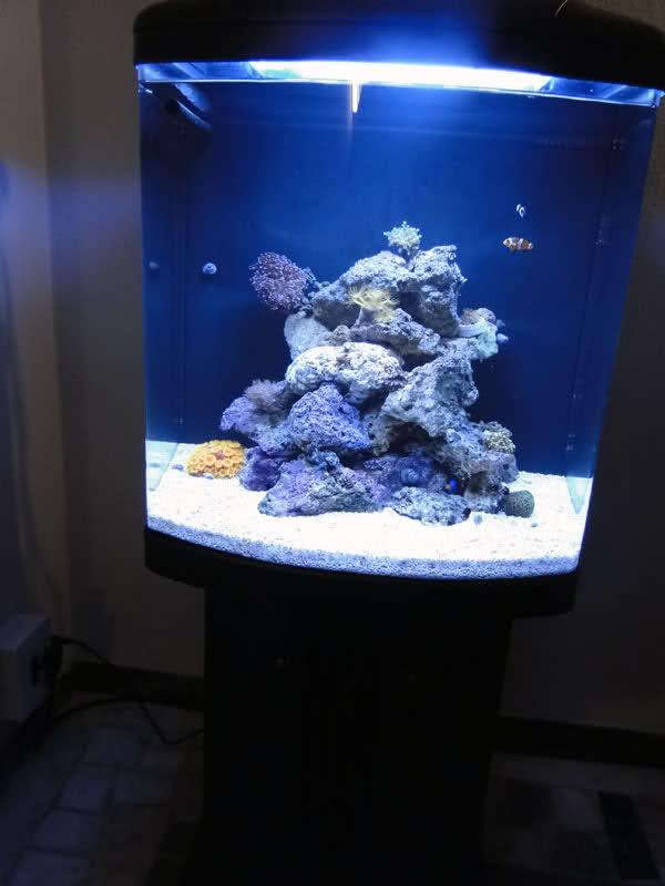 SERA Biotop 130 Nano Reef - LPS e Moles 29pyh68