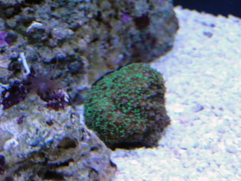 SERA Biotop 130 Nano Reef - LPS e Moles 2qxrzm8