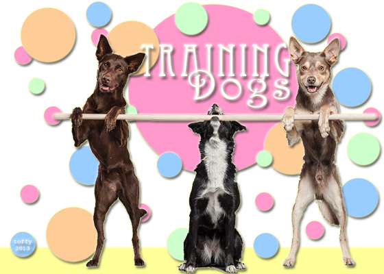 Training Dogs